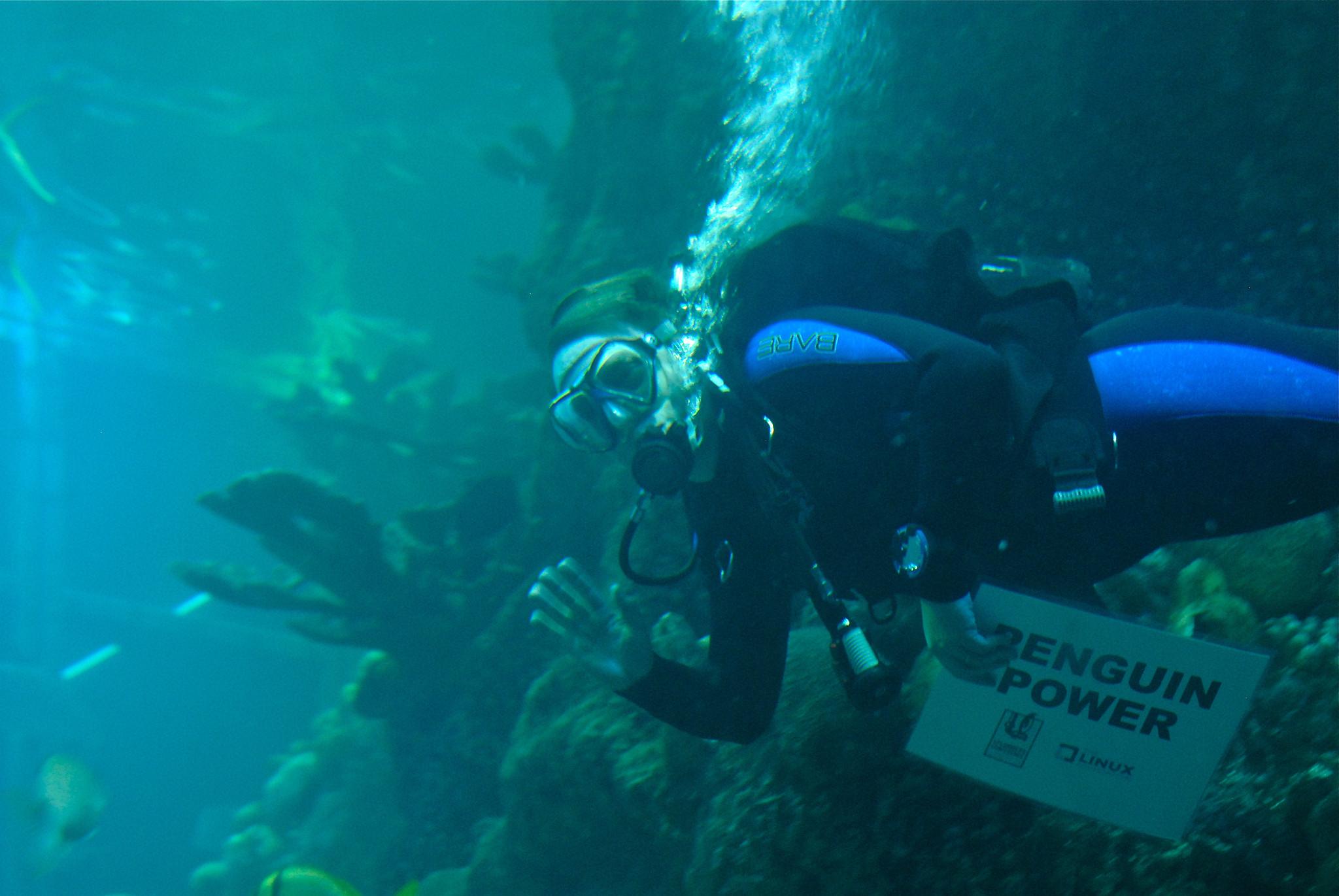 Linus diving